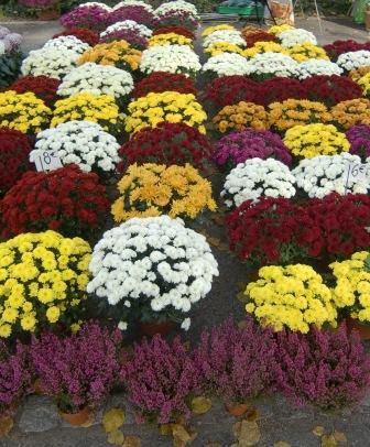 fleursdetoussaint.jpg