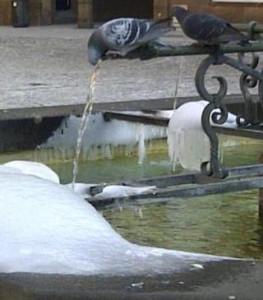 pigeon-gelé-263x300